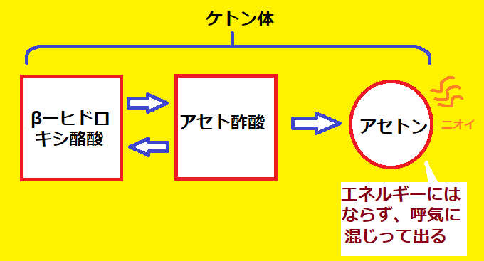 3種類のケトン体